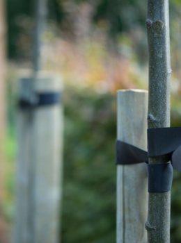 Aanplanting bomen Wehl